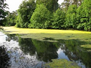 Eutrophication-lake